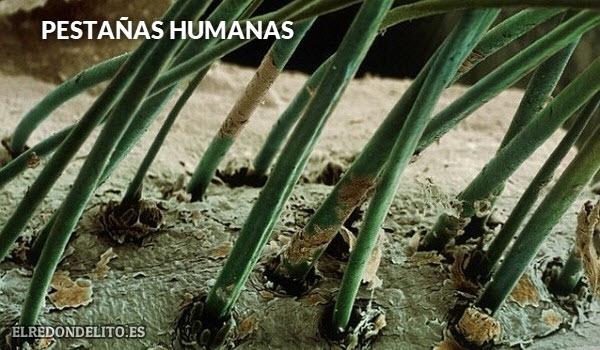 pestanas_humanas