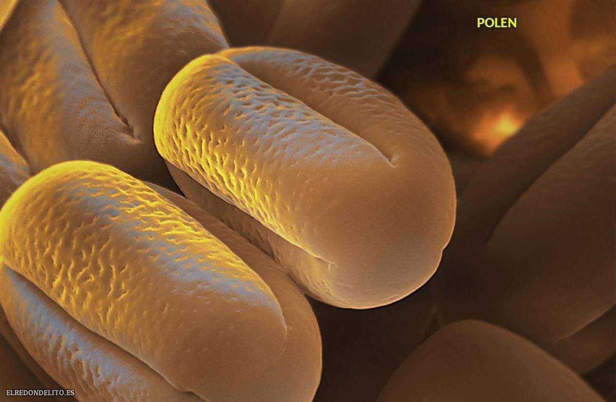 polen (10)