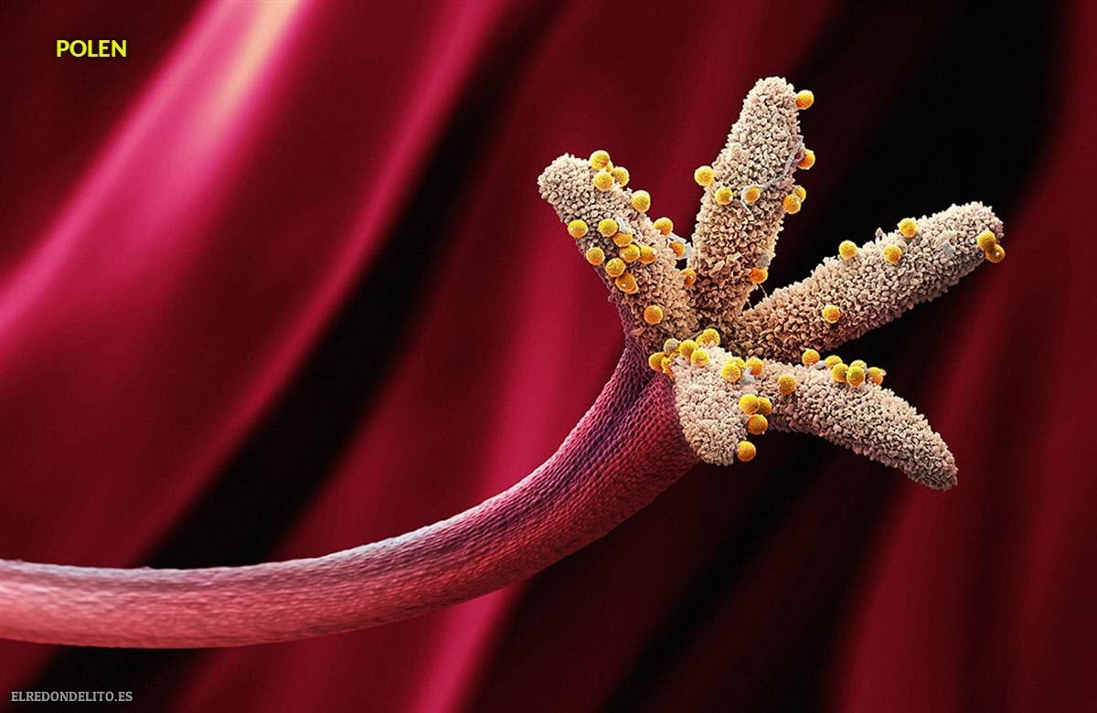 polen (12)