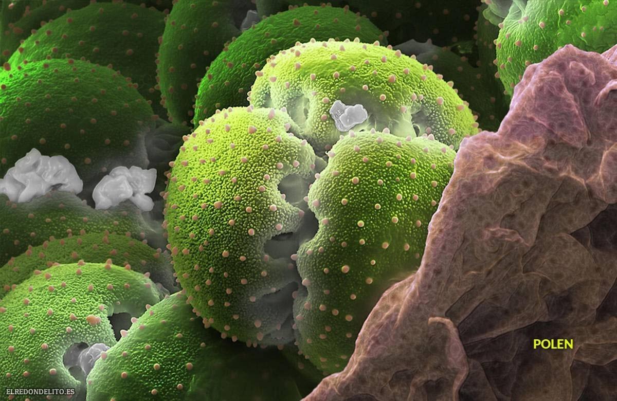 polen (4)