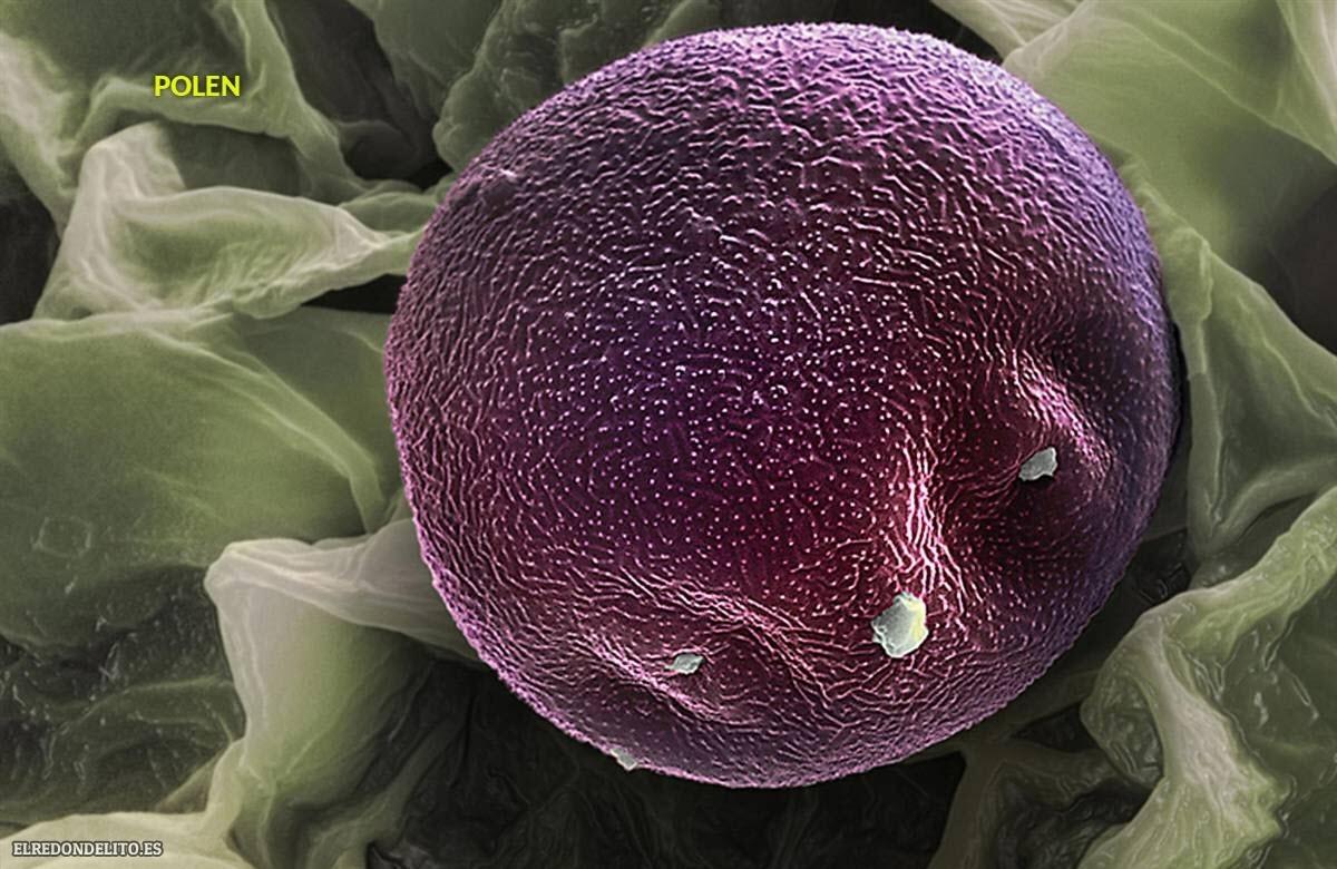 polen (6)