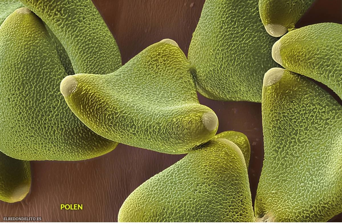 polen (7)