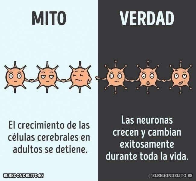mitos_vs_realidad_elredondelito.es_011