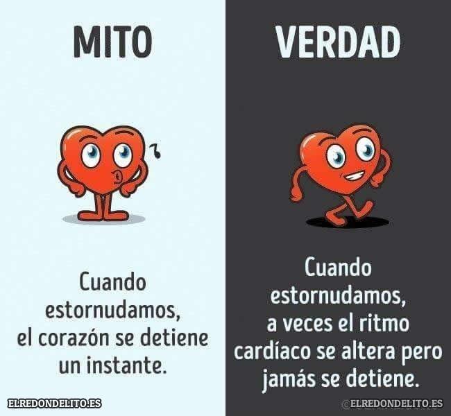 mitos_vs_realidad_elredondelito.es_015