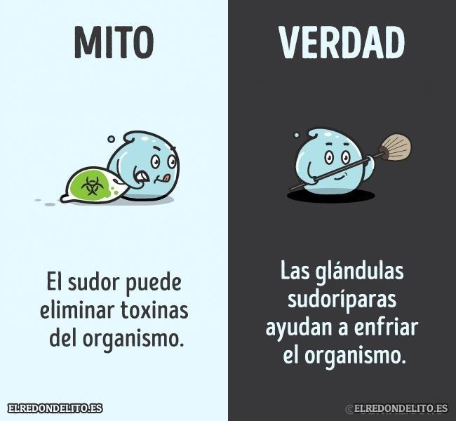 mitos_vs_realidad_elredondelito.es_018a