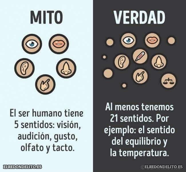 mitos_vs_realidad_elredondelito.es_019