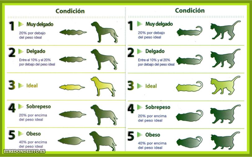 sobre_perros_y_gatos_001