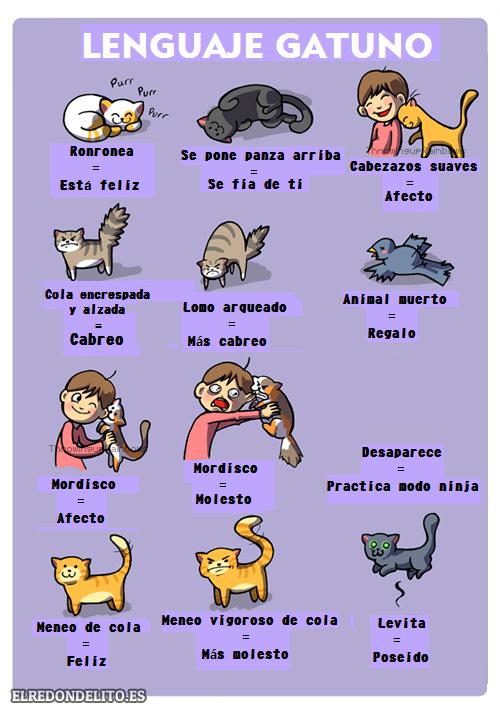sobre_perros_y_gatos_006