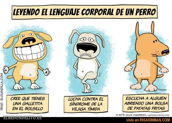 sobre_perros_y_gatos_007