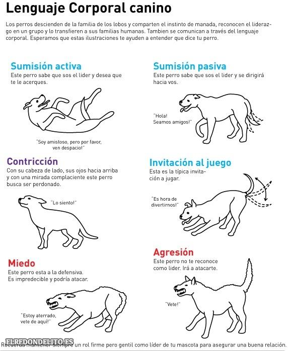 sobre_perros_y_gatos_008