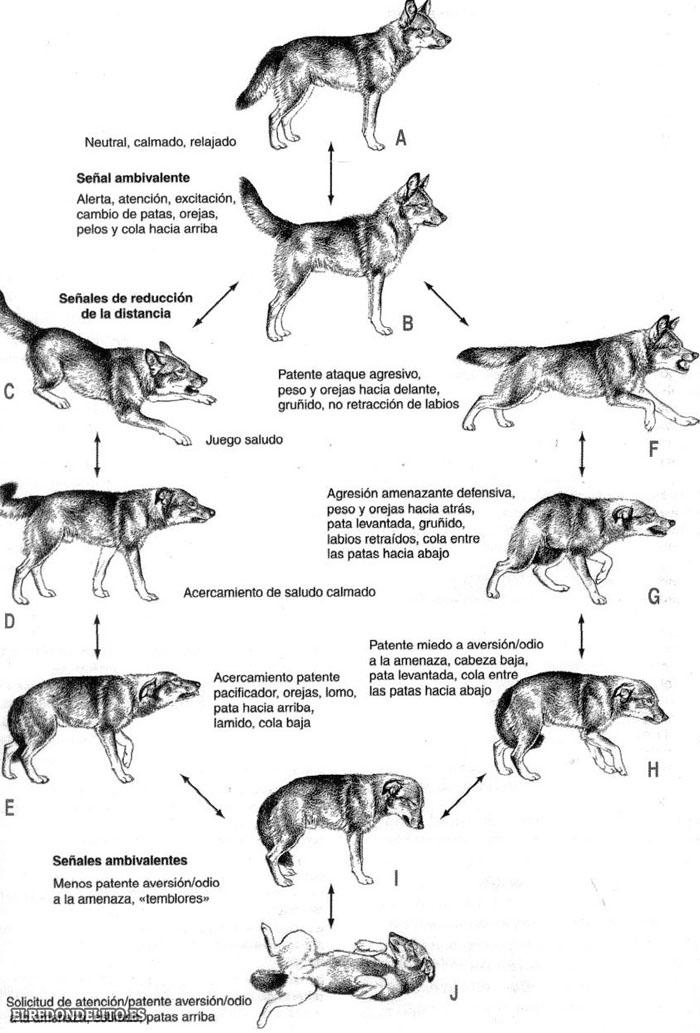sobre_perros_y_gatos_010