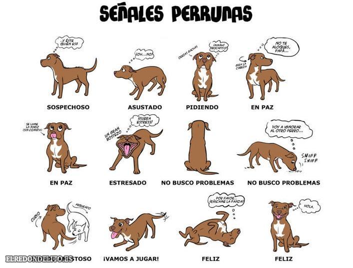 sobre_perros_y_gatos_012