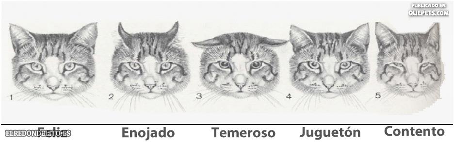 sobre_perros_y_gatos_013