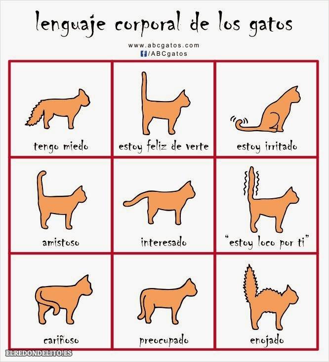 sobre_perros_y_gatos_015
