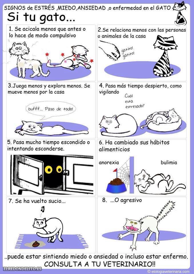 sobre_perros_y_gatos_016