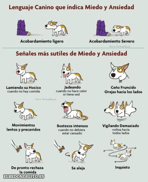 sobre_perros_y_gatos_017