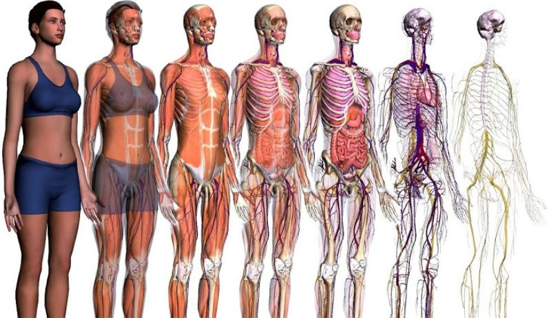 Imagen que muestra los distintos organismos que nos componen.