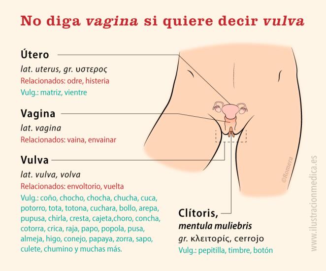 Ilustración de una vagina, un coño, vamos