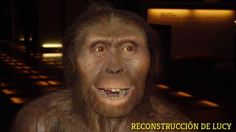 La que creíamos nuestro ancestro más antiguo, Lucy, que se mato al caerse de un árbol y que ha sido reconstruida a partir de los huesos de su cráneo.