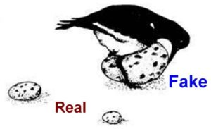 Hueos falsos grandes son preferencia de las aves para incubar