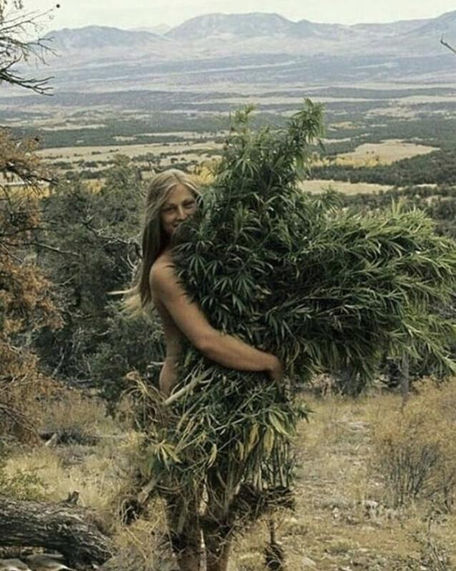 Abrazand marihuana en los 70