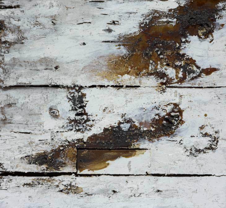 008-joseph-beuys-natural-history