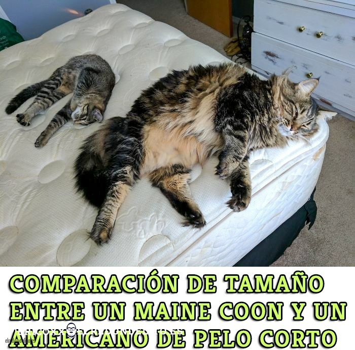 comparacion_antes_y_despues_el_redondelito.es_002