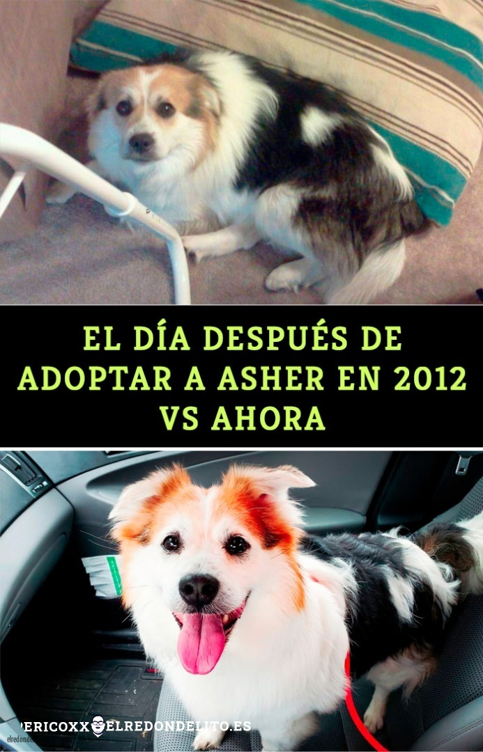 comparacion_antes_y_despues_el_redondelito.es_014