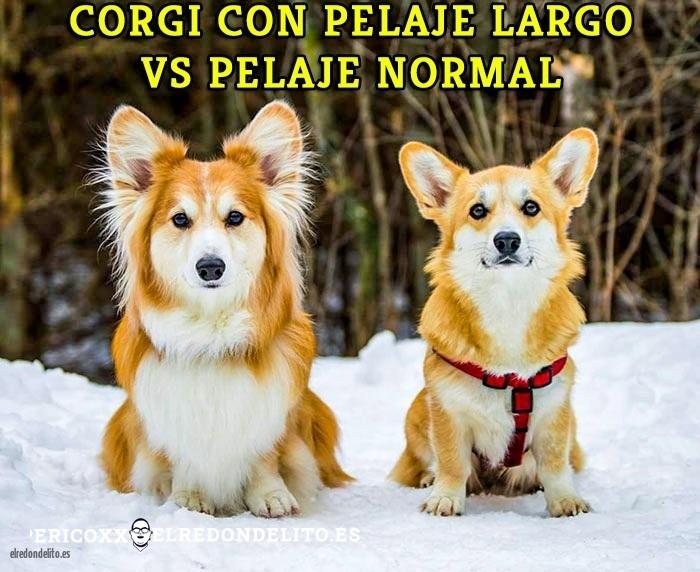 comparacion_antes_y_despues_el_redondelito.es_018