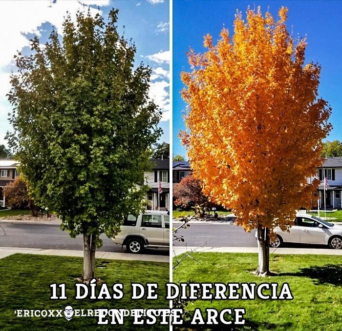 comparacion_antes_y_despues_el_redondelito.es_020