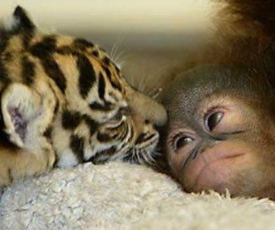 curiosidades_animales