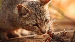 curiosidad_gato