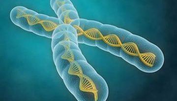 cromosoma_peq